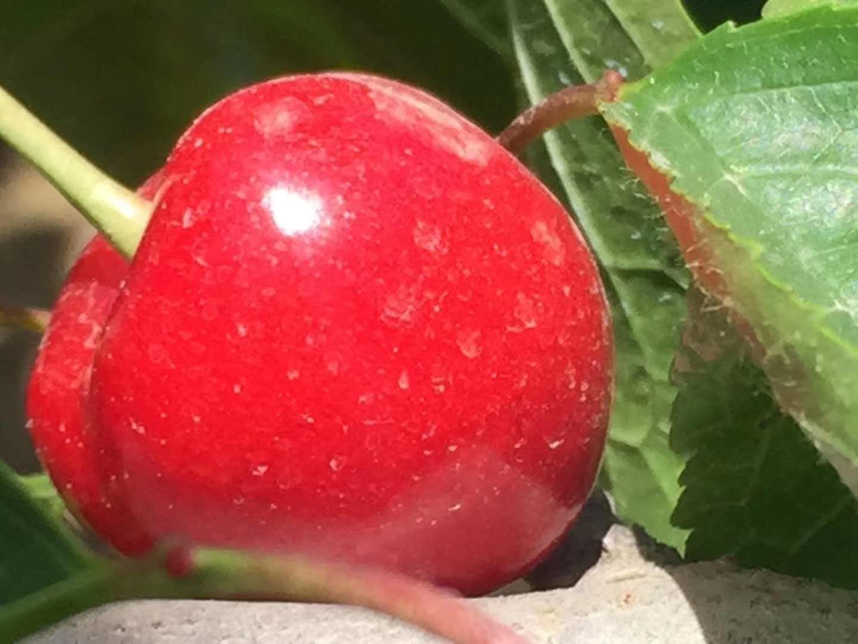 天水樱桃5斤新鲜樱桃