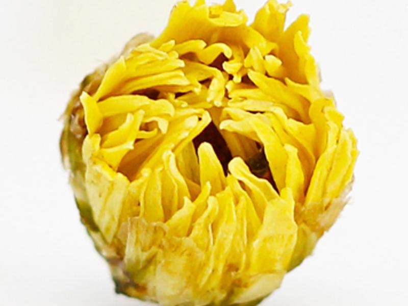 甘肃白银胎菊